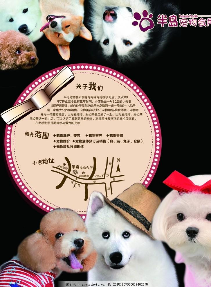 动物 宠物会员 狗狗素材 狗素材 狗 宣传画 店内海报 浅色 单页 dm