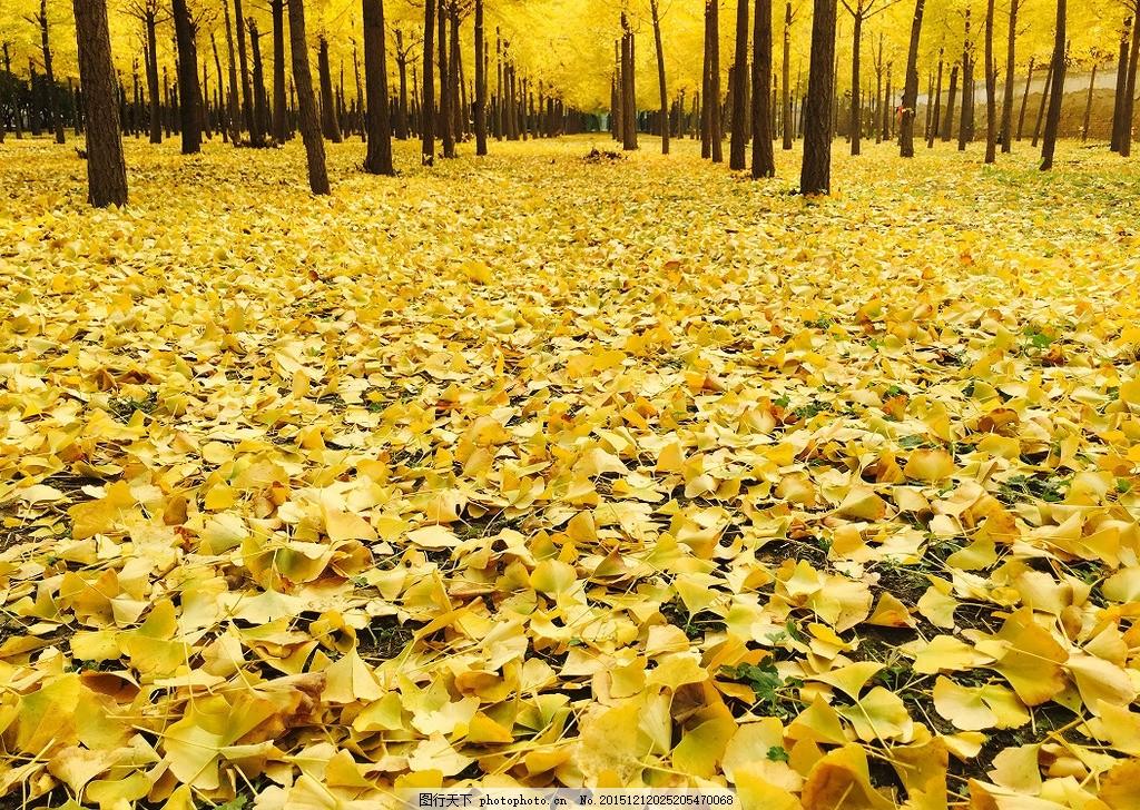 壁纸 成片种植 风景 花 植物 种植基地 桌面 1024_728