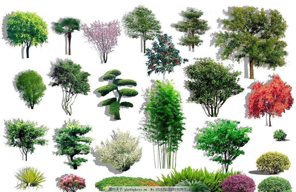 树 灌木 灌木 竹子 树 ps素材 立面树 乔木 常绿 景观 后期处理 设计