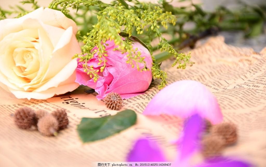 玫瑰花瓣 花 花瓣 报纸 玫瑰花 粉色玫瑰花 松树籽 清新背景 摄影