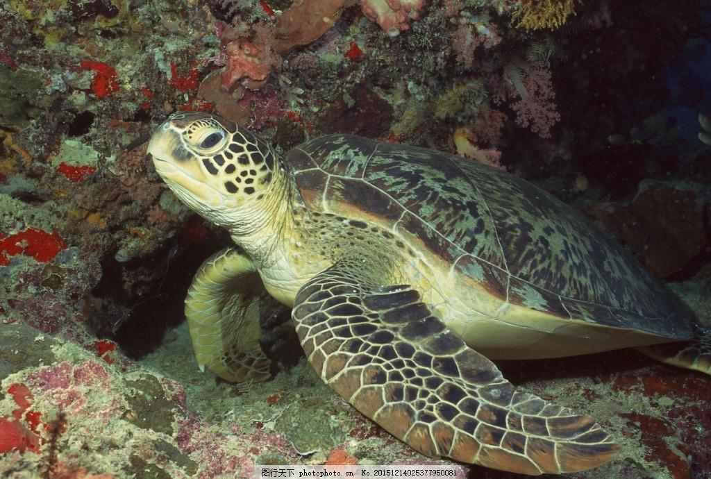 海洋生物 动物 景观 摄影 共享图片