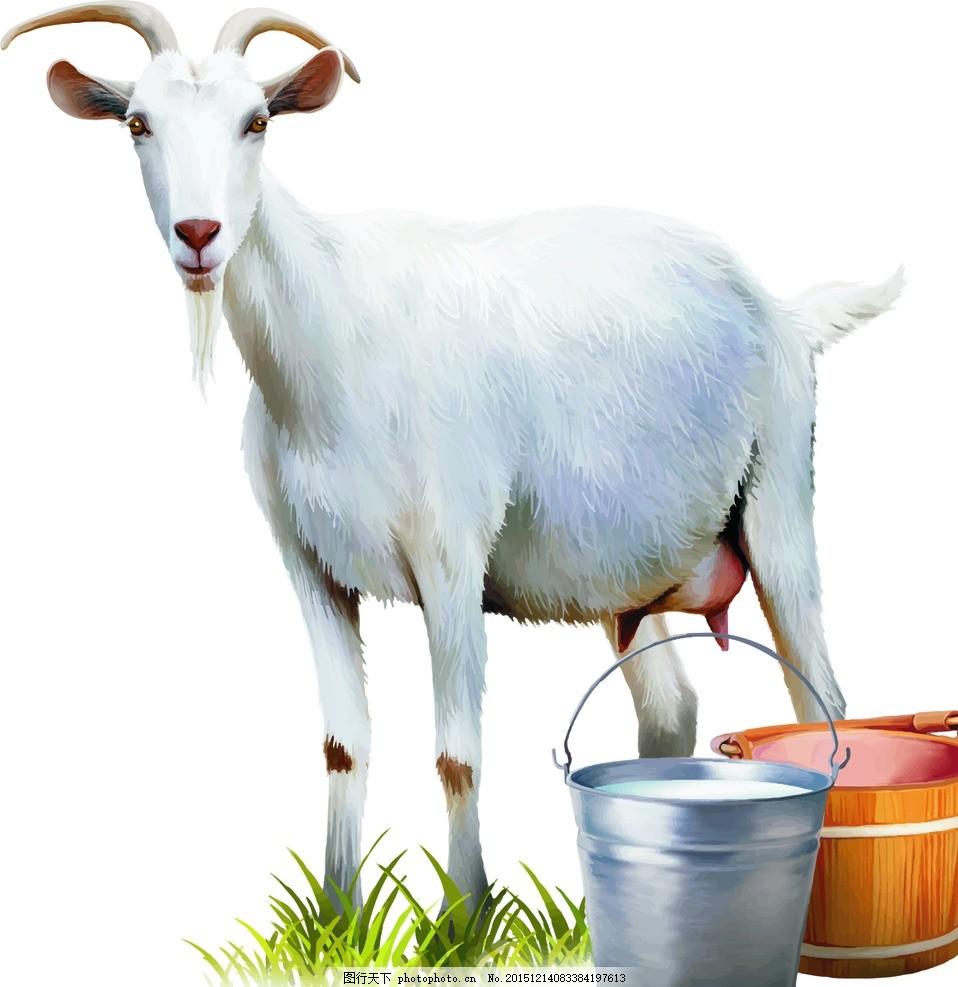 逼真白色山羊 写实 动物 矢量素材 卡通 广告设计 卡通设计