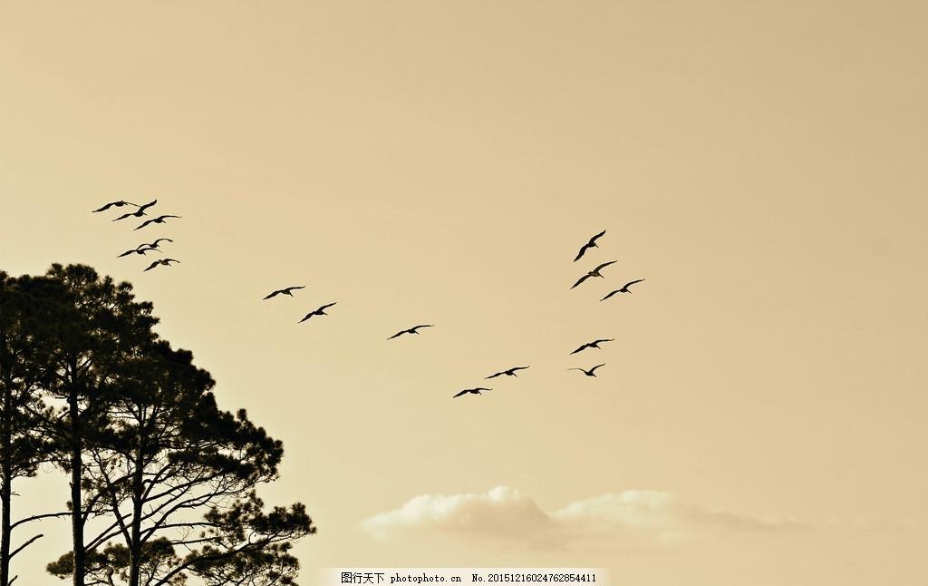 写意大雁南飞 飞行动物 松树 中国画 摄影