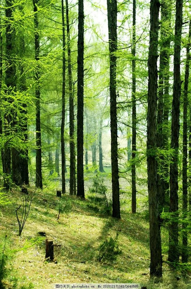 壁纸 风景 森林 桌面 653_987 竖版 竖屏 手机
