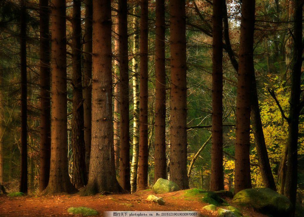油画 树林 未分层 油画 树林 树杆 风景画 客厅装饰画 卧室装饰画