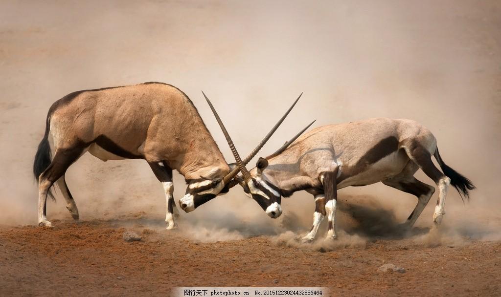 炫酷羚羊 唯美 炫酷 羚羊 羊 动物 野生 可爱 保护动物 野生动物 野生