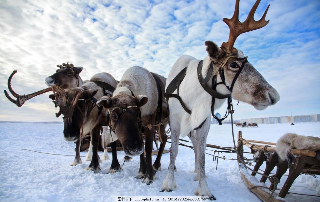 炫酷麋鹿 唯美 炫酷 麋鹿 动物 可爱 野生 小鹿 雪地鹿 摄影 生物世界