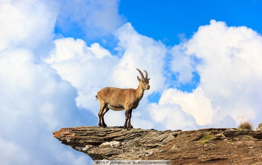 炫酷羚羊 唯美 炫酷 羚羊 羊 动物 野生 可爱 保护动物 藏羚羊 摄影