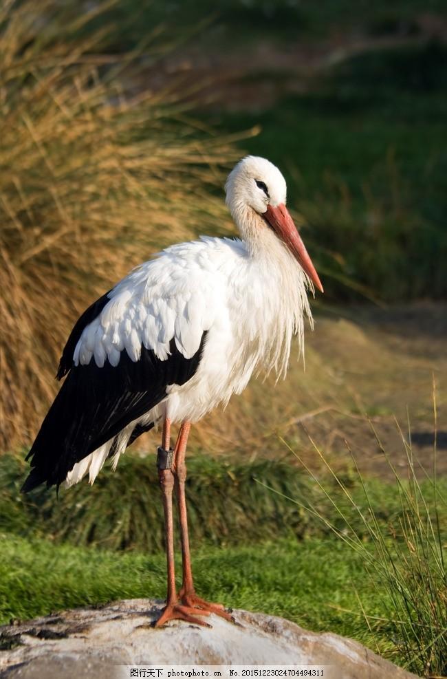 炫酷白鹤 唯美 炫酷 白鹤 动物 野生 保护动物 可爱 鹤 摄影 生物世界
