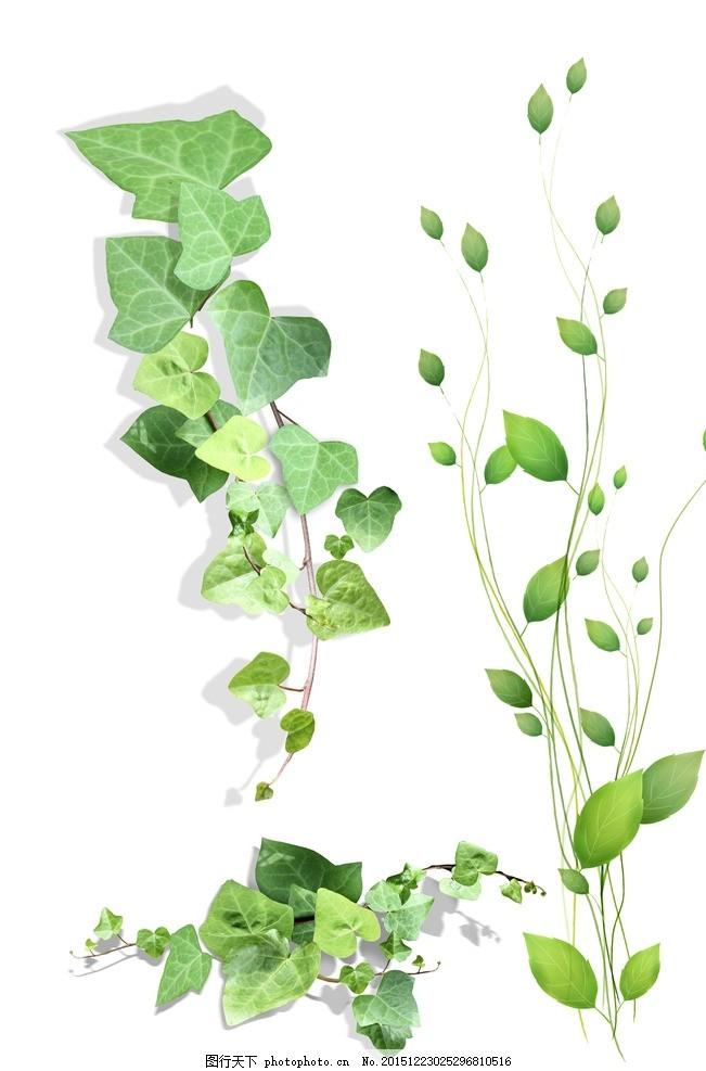 树藤 春季素材 春天素材 春天 春季 绿色 清新花纹 简洁花纹 矢量黑白