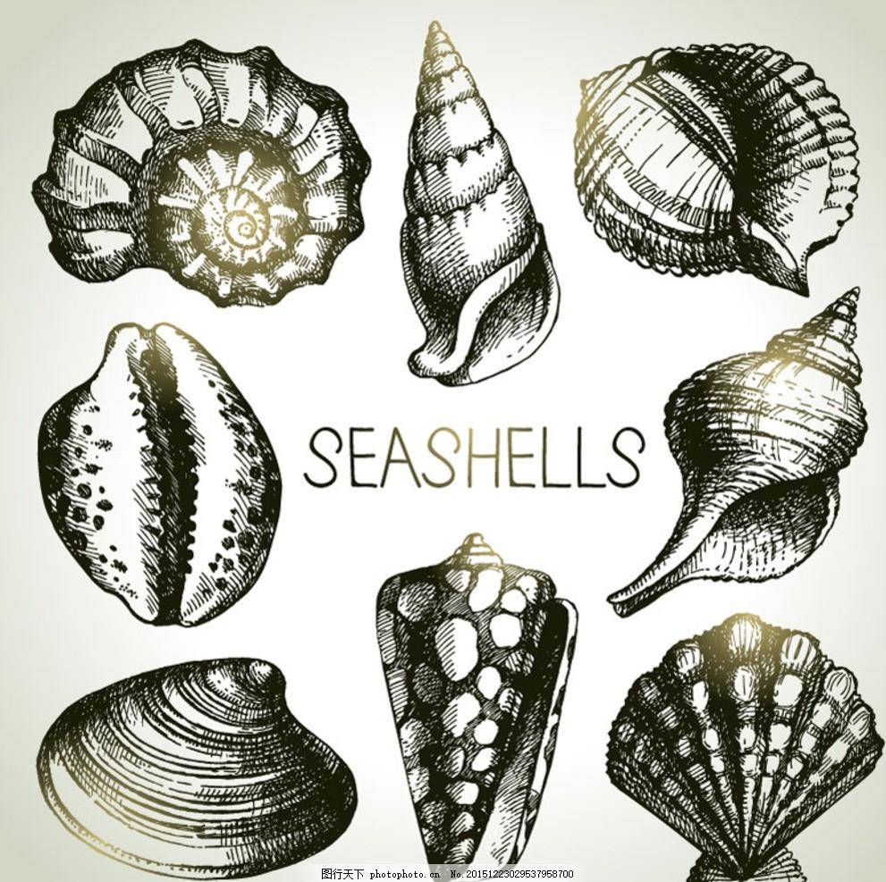 手绘贝壳 手绘海螺 丛云宝螺 花螺 玉螺 扇贝 海螺 海产品 海洋生物