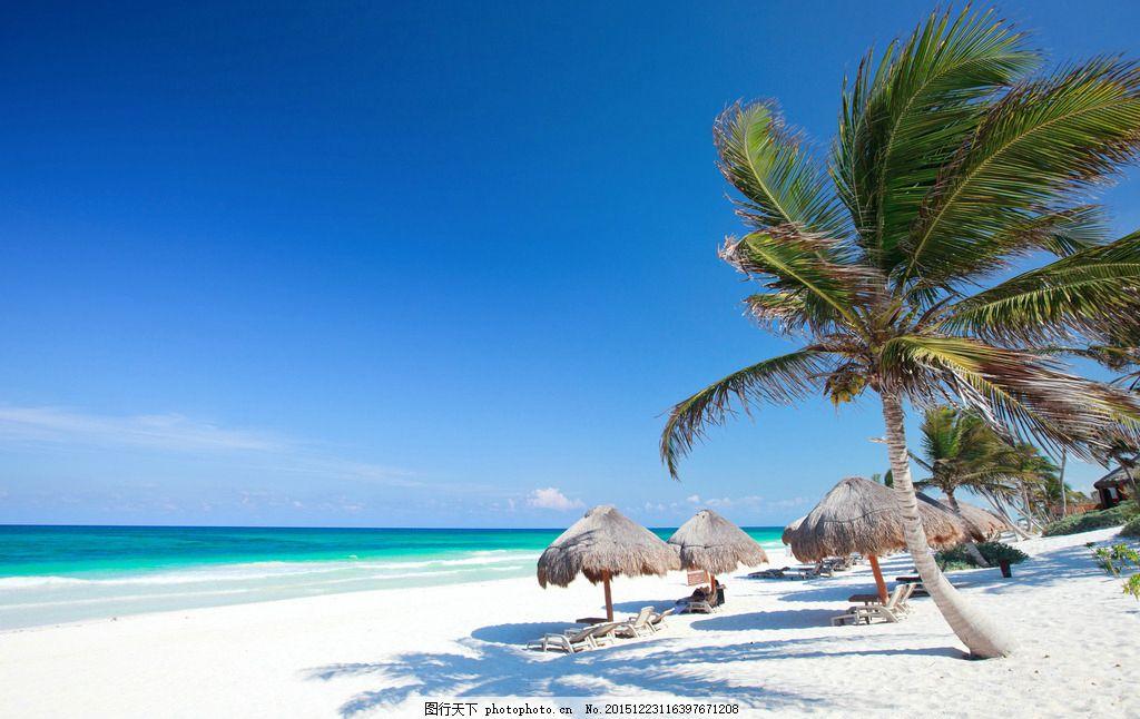 椰子树 树木 绿树 热带植物 植被 海边度假 热带海边 旅游风光 风景图
