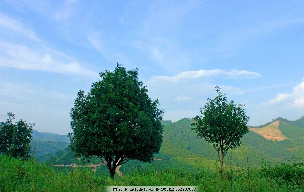 小树图片 小树素材 蓝天小树 贺州风光 摄影 自然景观 自然风景 72dpi