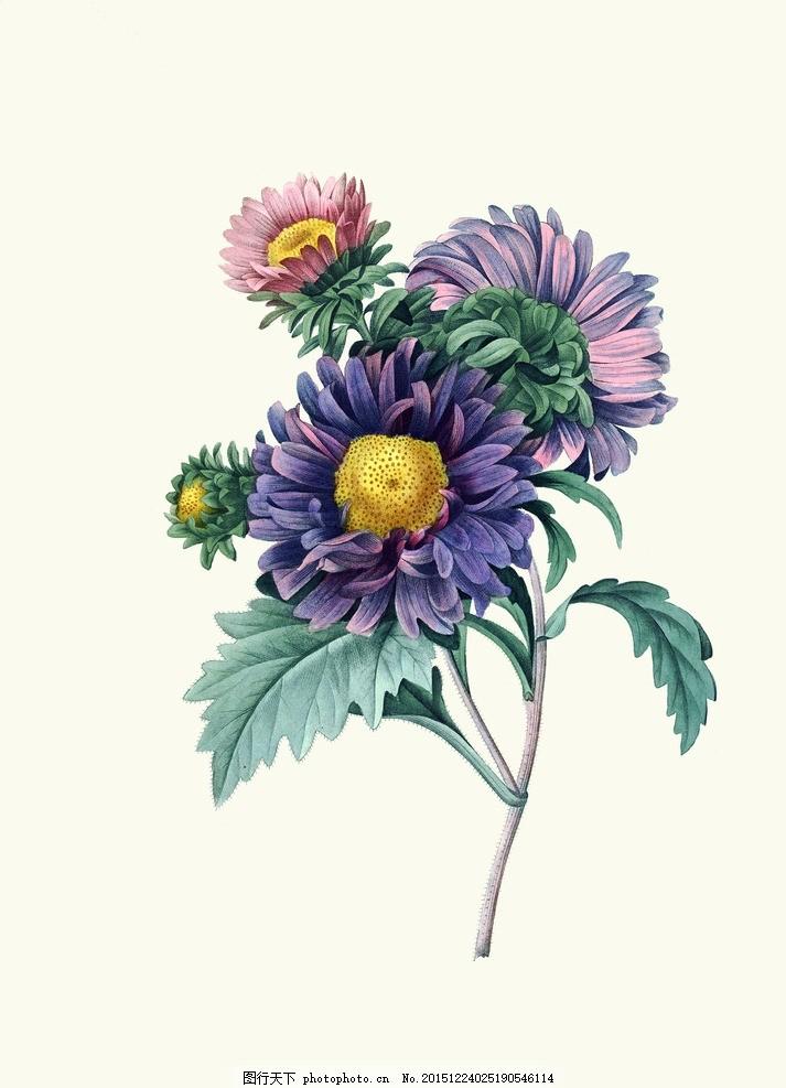欧式手绘花朵 玫瑰 复古 装饰画 花卉 玫瑰花 英伦风 植物 古典