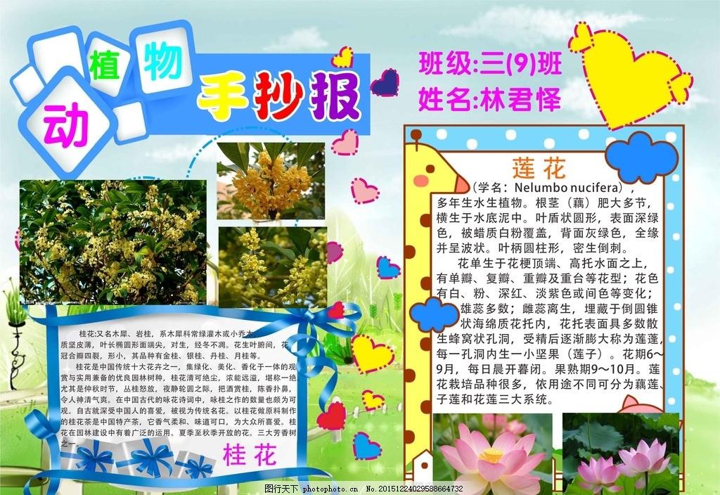 动植物手抄报 学生 手抄报 动植物 动物 海报 作业 任务 小学生 设计