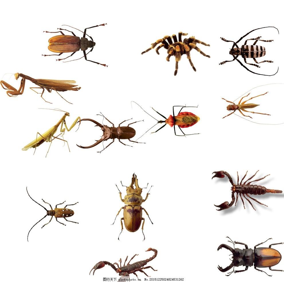 儿童 昆虫家族 昆虫大全 昆虫王国 素材 卡通 时尚 梦幻 昆虫 蝎子 蝎