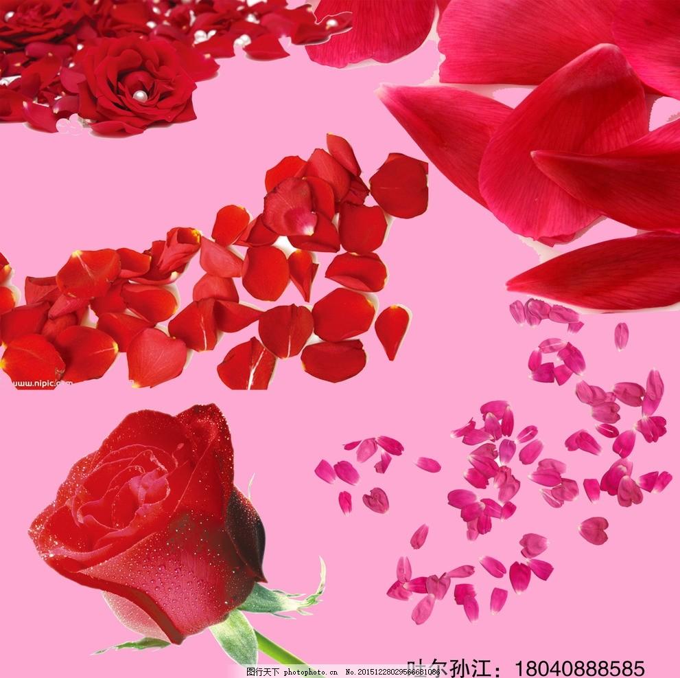 花瓣 玫瑰花 广告素材 良心 红色 背景