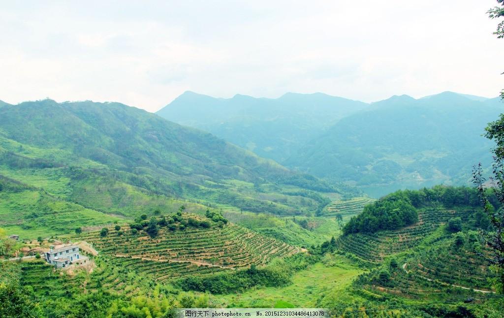 茶山 山 树林 茶园 田园 风景 摄影 自然景观 山水风景 72dpi jpg