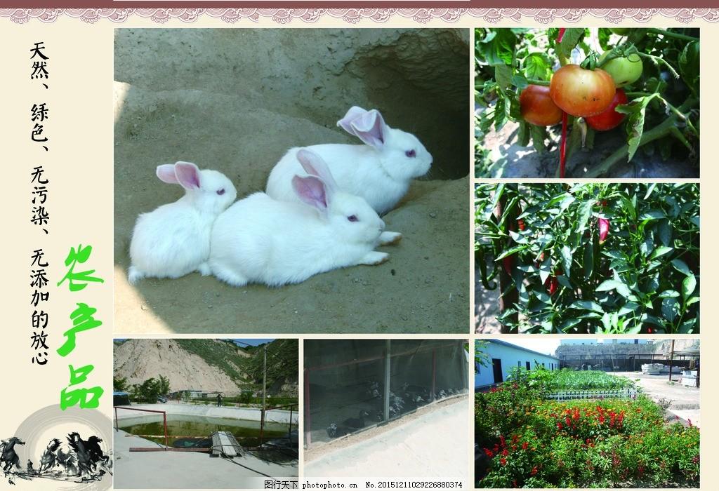 蔬菜展板,蔬菜海报,蔬菜文化,蔬菜图片,蔬菜素材,蔬菜挂画,蔬菜饮食